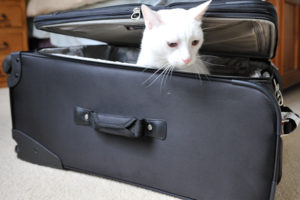 Wilber Philber Hides Out IN Debbie Phillips' Suitcase