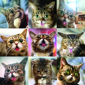 The Many Faces of Lil Bub via lilbub.com