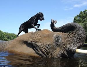 Dog and Elephant- Barry Bland