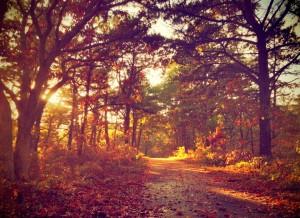 Fall from Rob Berkley