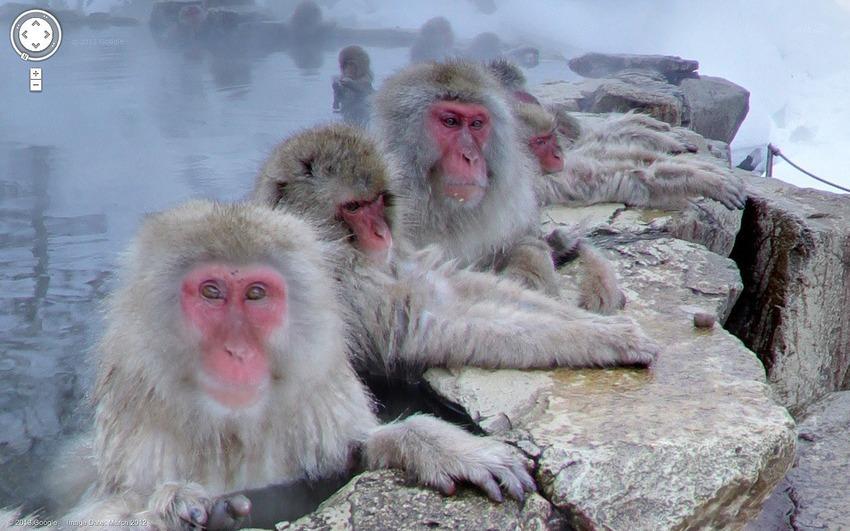Google Street View at Monkey Park in Nakano Japan