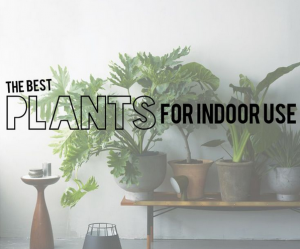The best plants for indoor use from Amber Interior Design