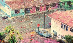 What 8 million flower petals looks like
