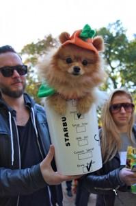 Pomeranian Spiced Latte via Buzzfeed